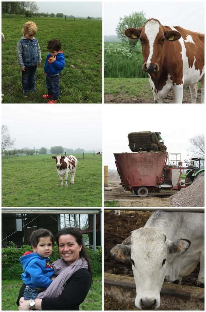 Op bezoek bij koopeenkoe.nl_5