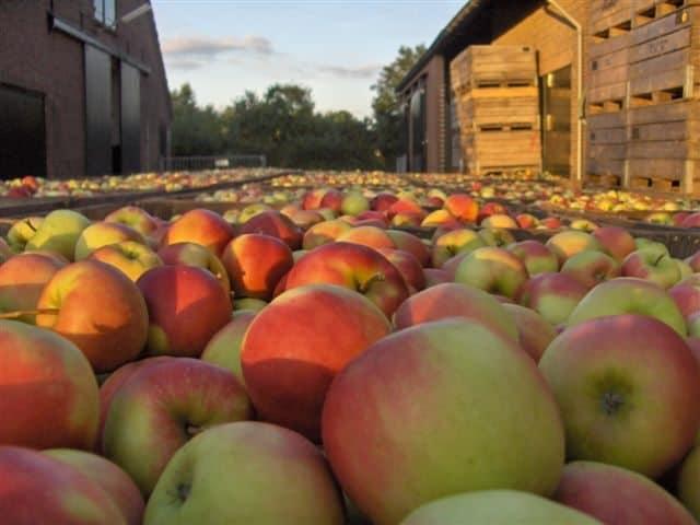 Seizoensfruit oktober_elstar appels_2