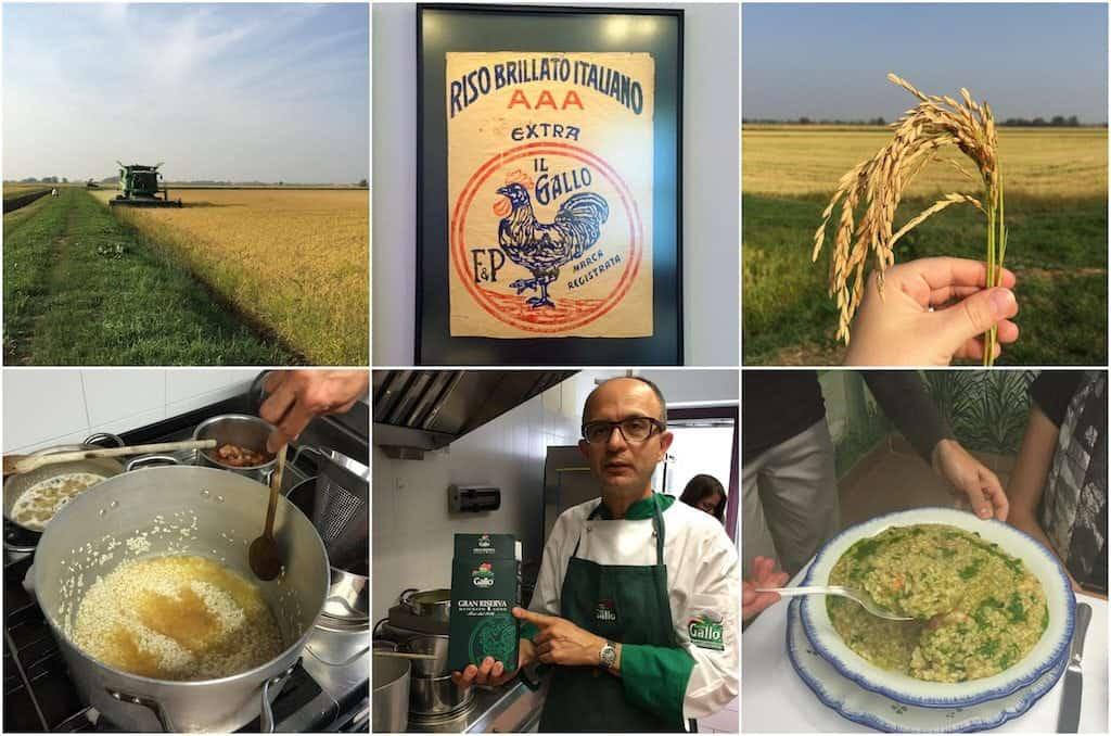 riso-gallo-risotto-maestro-nederland-5